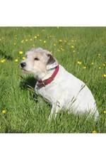 Weatherbeeta Leather Plaited Dog Collar - Brown / Maroon